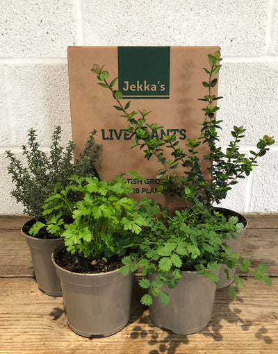 Jekka's Winter Culinary Collection - 4 * 1 Ltr Herb Plants
