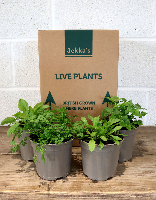Jekka's Spring Salad Collection - 4 * 1 Ltr Herb Plants