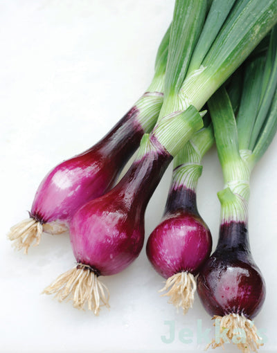 Jekkapedia: Red Salad Onion (Allium cepa 'Rossa da Inverno Sel Rubino')
