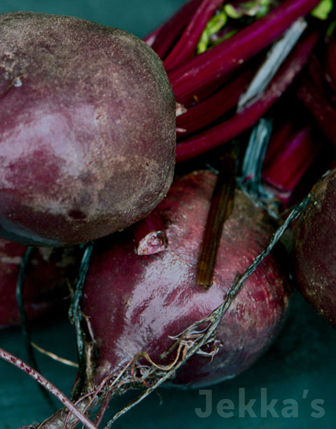 Jekkapedia: Bulls Blood Beetroot