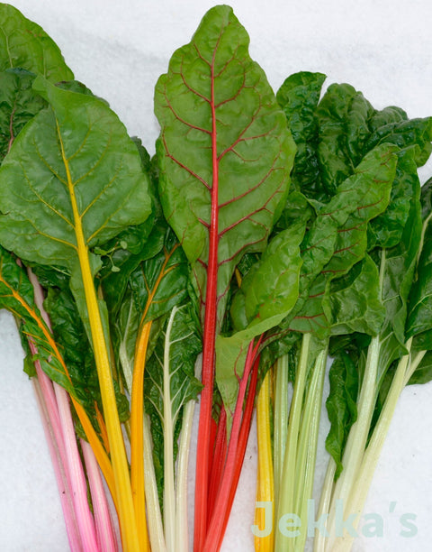Jekkapedia: Rainbow Chard (Beta vulgaris 'Rainbow Chard')