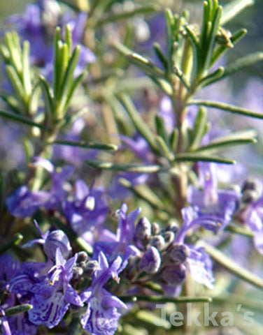 Jekkapedia: Rosemary McConnells Blue