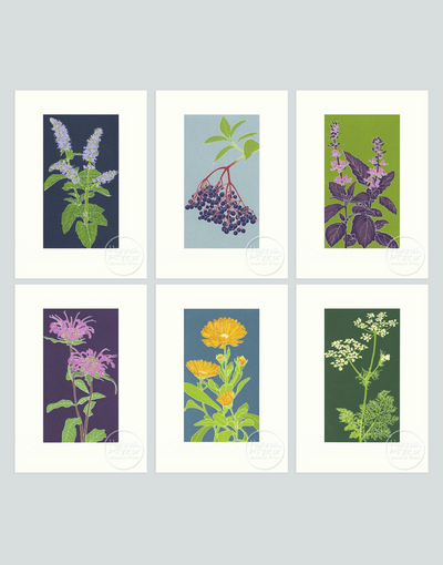 Herb Screenprint Collection