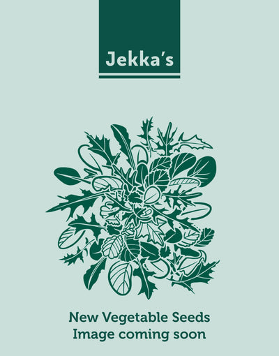 Jekkapedia: Red Mizuna (Brassica rapa var. japonica 'Red Empire')