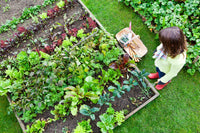 Grow your own Veggies: Getting started