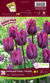 Tulip Bulbs 'Landscape Purple'