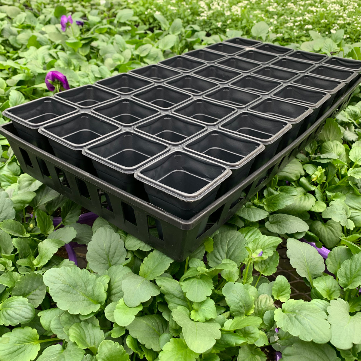 Seed Starting Tray, 32-count