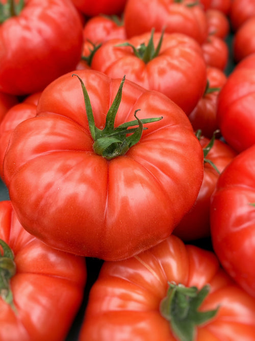 Sun Harvest signature Beefsteak tomatoes, minimum 2.5 lb (1.15kg)