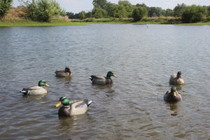 Bigfoot™ Floating Lifesize Mallards 6 Pk. 4 Drakes, 2 Hens.
