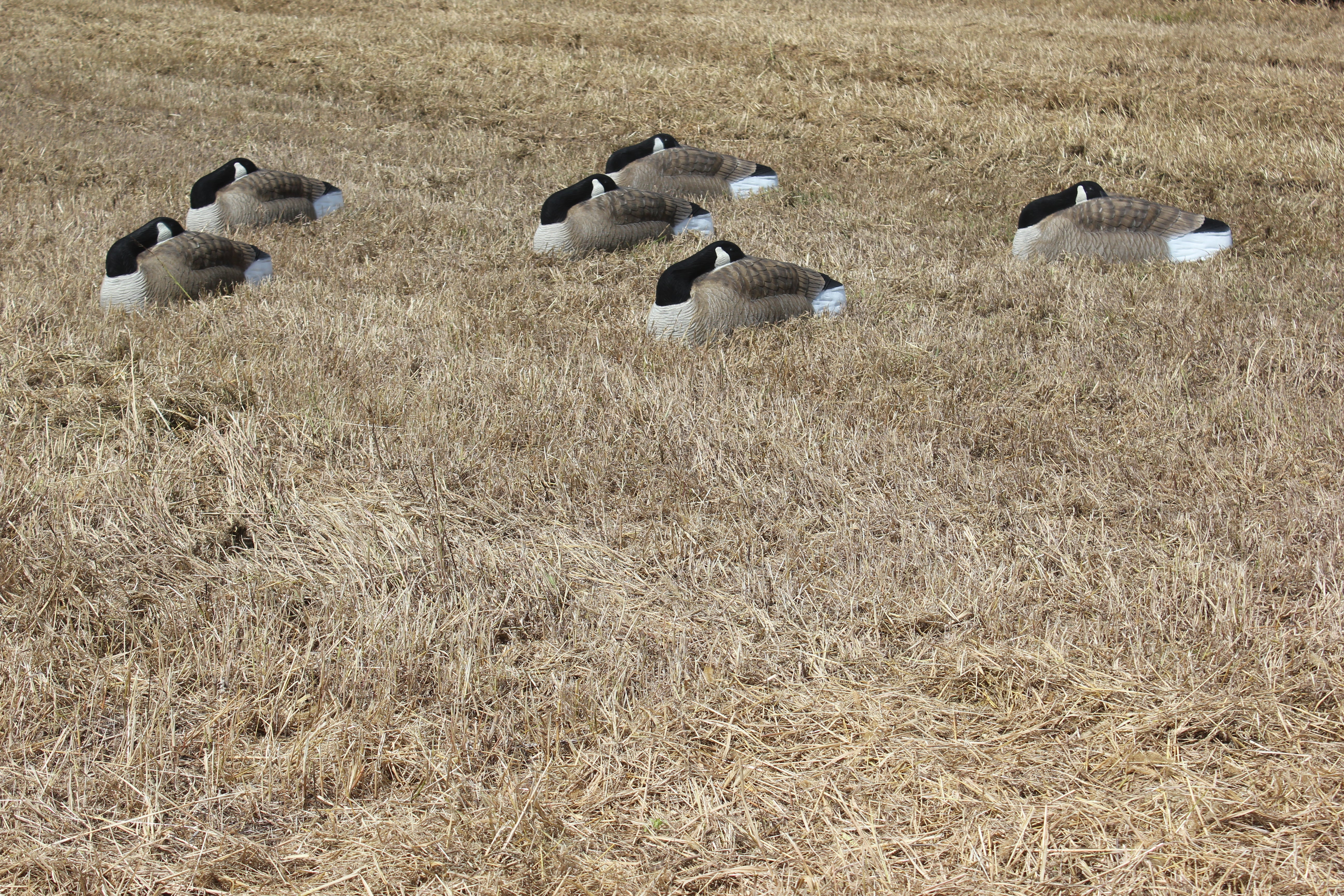 Bigfoot Canada Oversize Sleep Shell Decoys in the field
