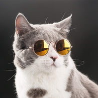 Cool Stylish and Funny Cute Pet Sunglasses-Best Funny Cute Pet Sunglasses