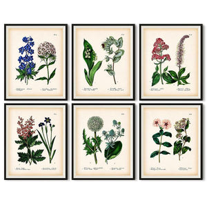 Vintage Botanical Gallery Wall Art Pictures from Gallery Wallrus | Eclectic Wall Art & Decor with Worldwide Shipping