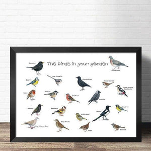 Birdwatcher Species Wall Art Picture from Gallery Wallrus | Eclectic Wall Art & Decor with Worldwide Shipping