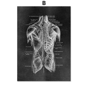 X-ray Anatomy Wall Art Prints Mix & Match from Gallery Wallrus | Eclectic Wall Art & Decor with Worldwide Shipping