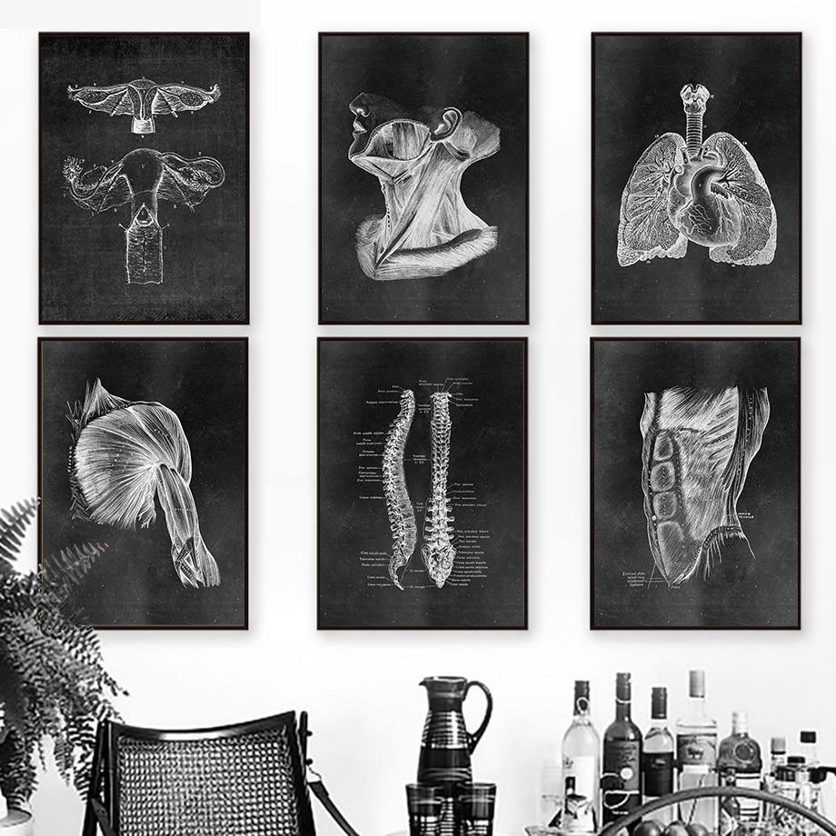 X-ray Anatomy Wall Art Prints Mix & Match 2 from Gallery Wallrus | Eclectic Wall Art & Decor with Worldwide Shipping