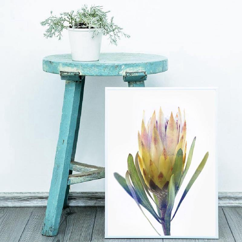 Protea Print Australian Flower Wall Art Print from Gallery Wallrus | Eclectic Wall Art & Decor with Worldwide Shipping