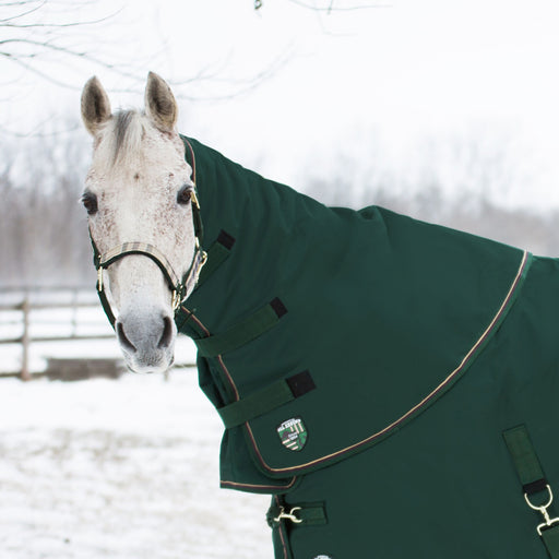 Horse wearing hunter green medium weight neck warmer