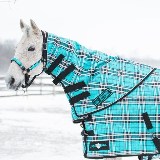Grey horse in snow wearing turquoise, black, and white plaid neck warmer