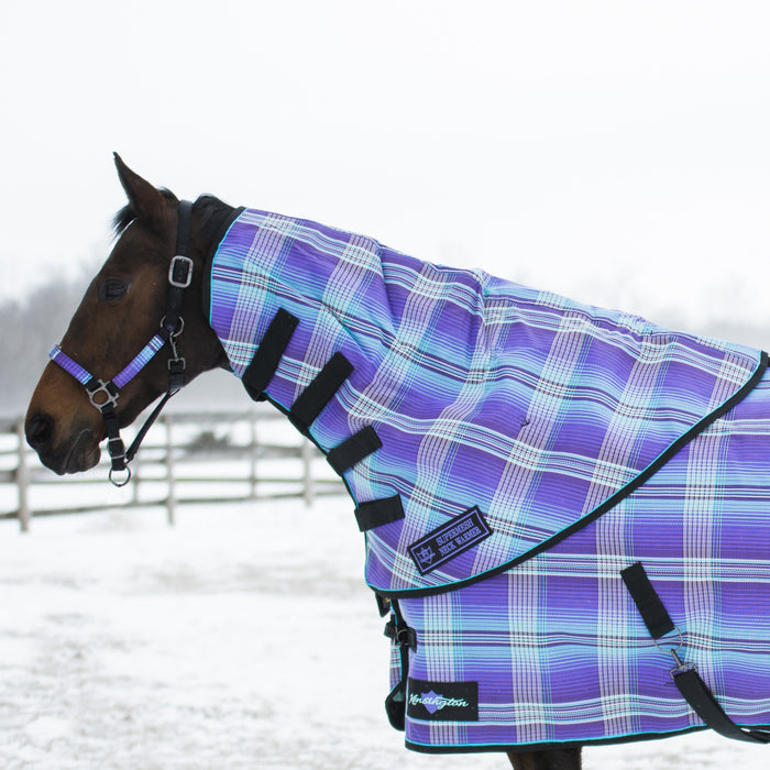 Horse in snow wearing purple, blue and white plaid neck warmer