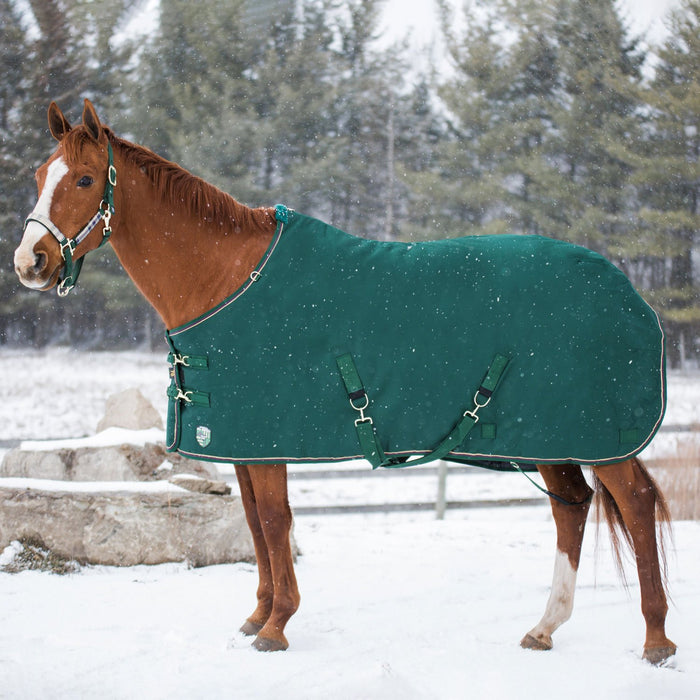 Horse wearing hunter green turnout blanket