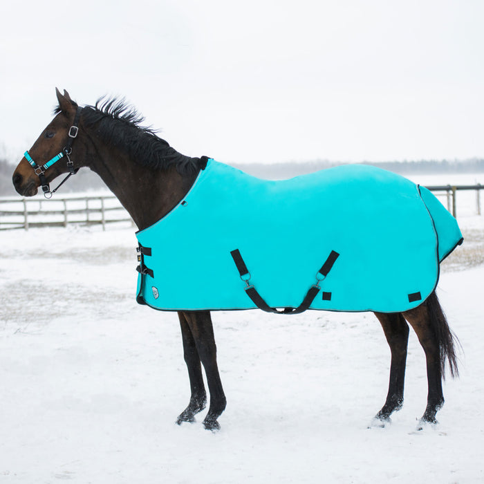 Bay horse wearing turquoise heavy weight turnout blanket