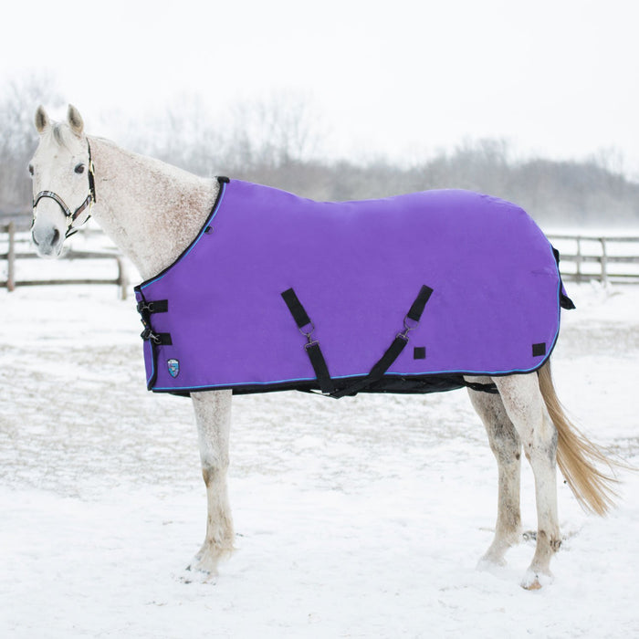 Horse wearing purple turnout blanket.
