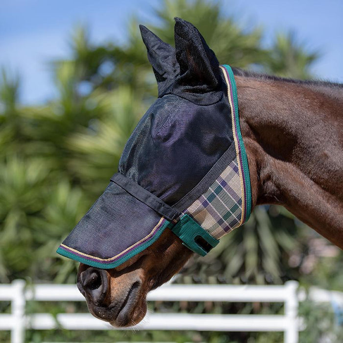 Horse wearing green and black 90% UV protective Uviator mask