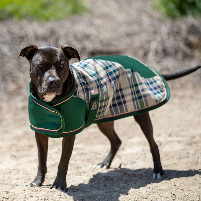 Kensington dog blanket coat. Waterproof, snow proof. green with green, plum, and tan plaid.