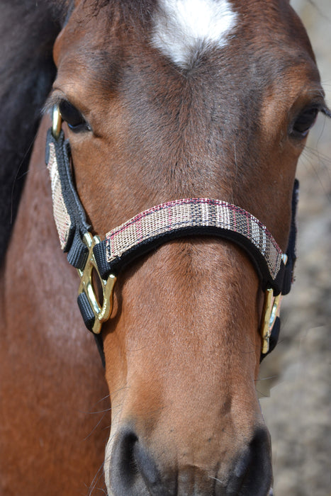 Premium Nylon Halter Set with 10' Lead