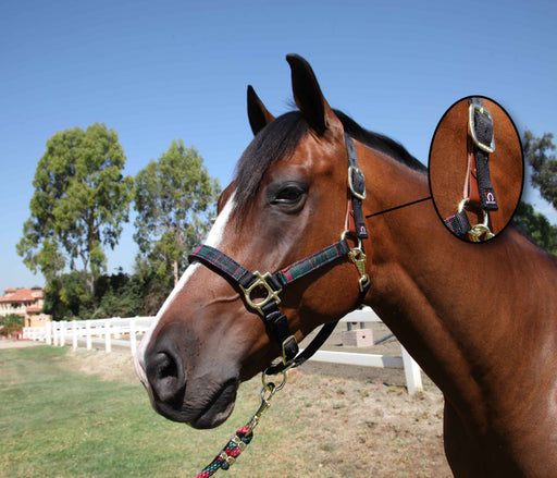 Breakaway Nylon Halter Set with 10' Lead