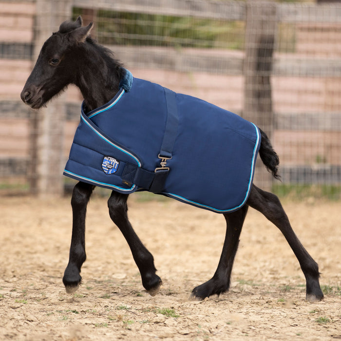 Friesian foal and navy adjustable blanket turnout