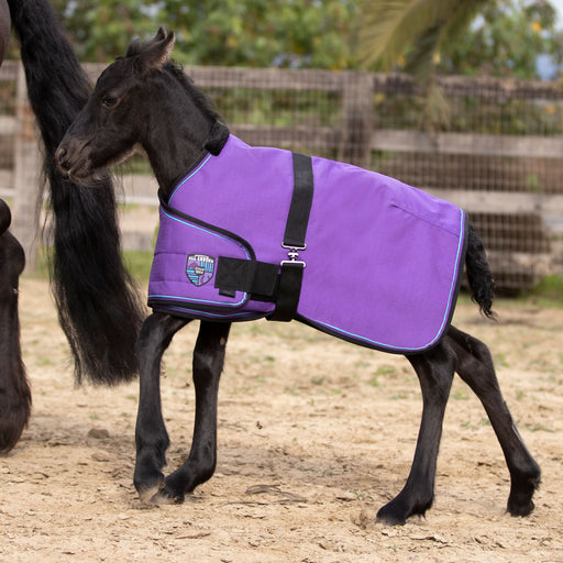 Friesian foal and purple adjustable blanket turnout