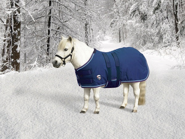 mini horse wearing blue winter blanket turnout