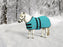 mini horse wearing turquoise winter blanket turnout