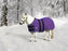 mini horse wearing purple winter blanket turnout