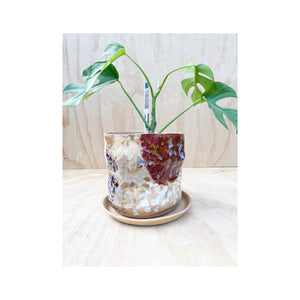 Medium Sandy Dreams  Planter #6