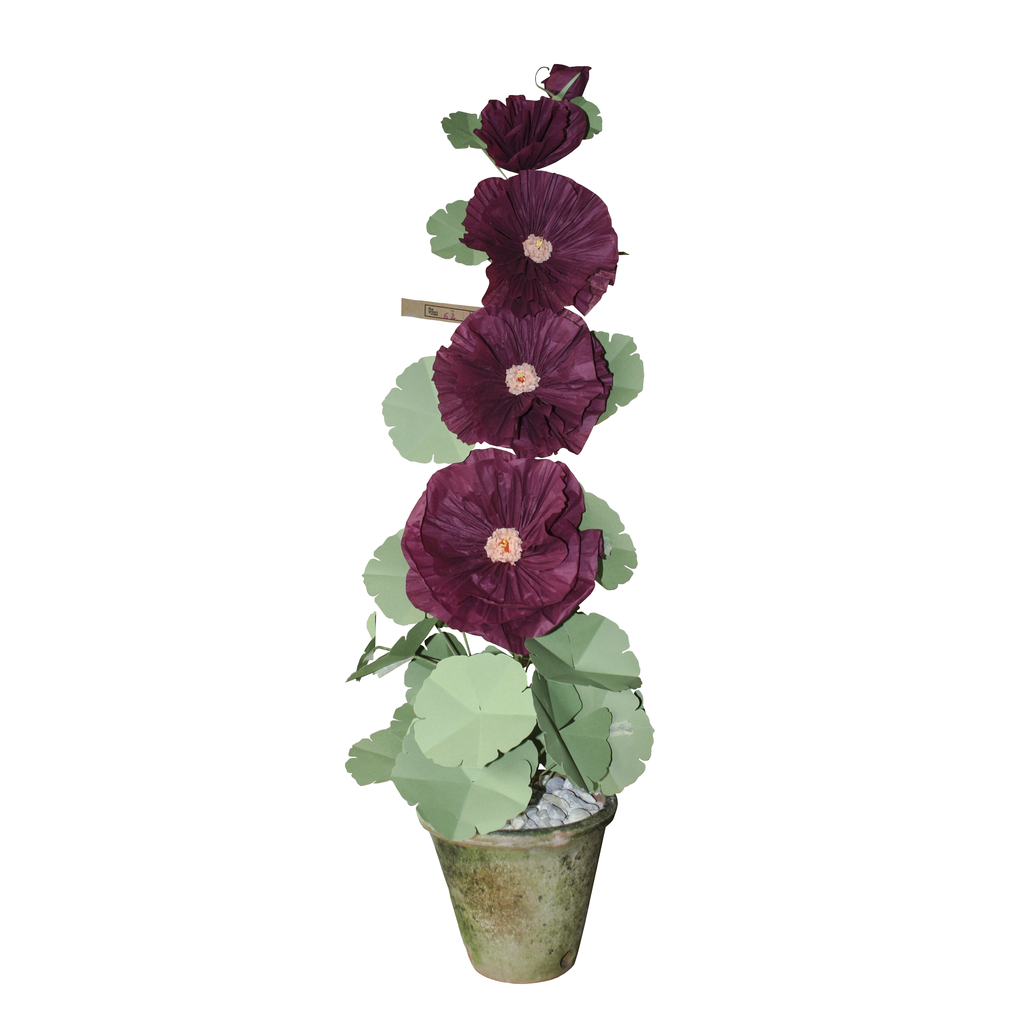 Potted Small Paper Hollyhock
