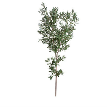 Pair of Olive Tree Branches