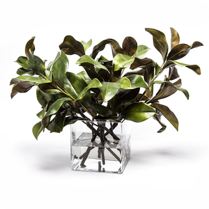 Magnolia Foliage in Square Clear Cube