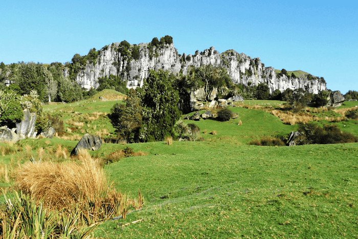 Smart trapping a new story for tour operators in rural Waitomo
