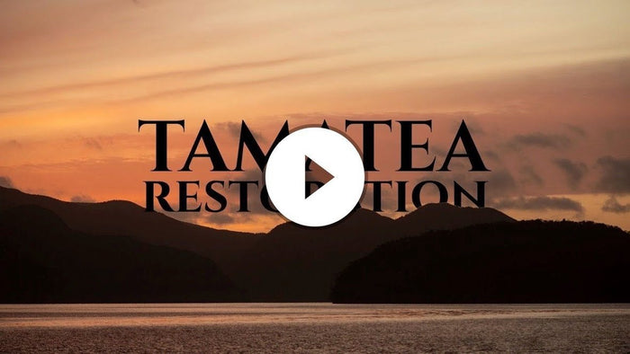 Project Tamatea - An update from the team at Pure Salt