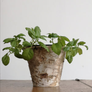 Bark flower pot
