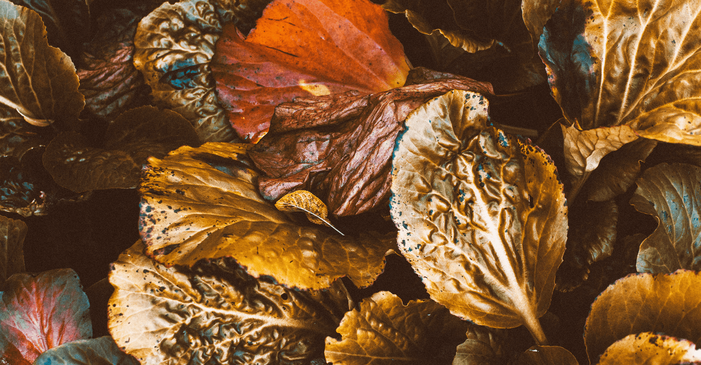7 things that we love about Autumn