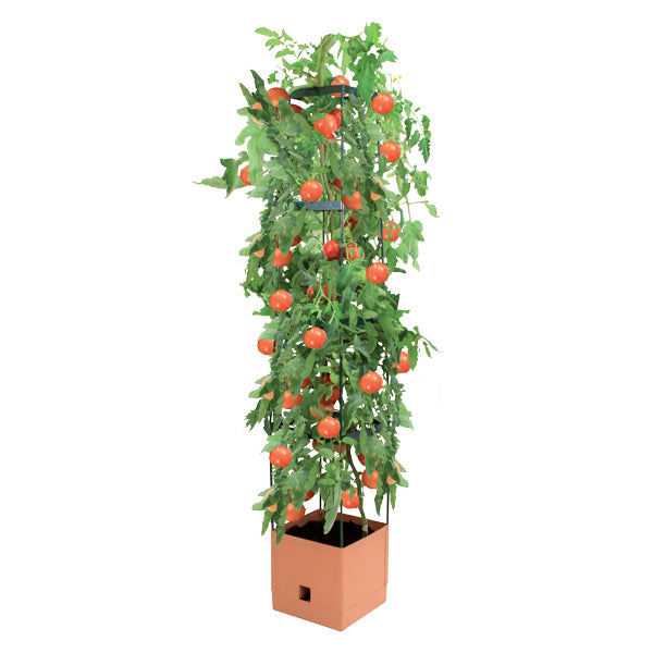 Tomato Tower Four Tier