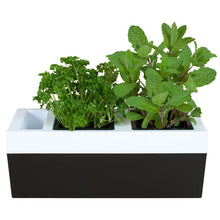 Load image into Gallery viewer, Kitchen Herb Grower - Two Pot