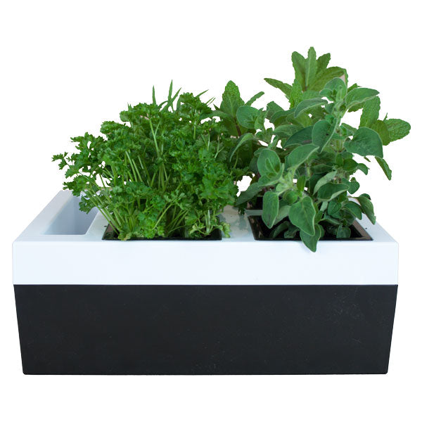 Kitchen Herb Grower - Four Pot