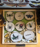 Insect Wooden Rounds
