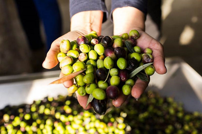 Why Extra Virgin Olive Oil [EVOO] is a better choice of oil