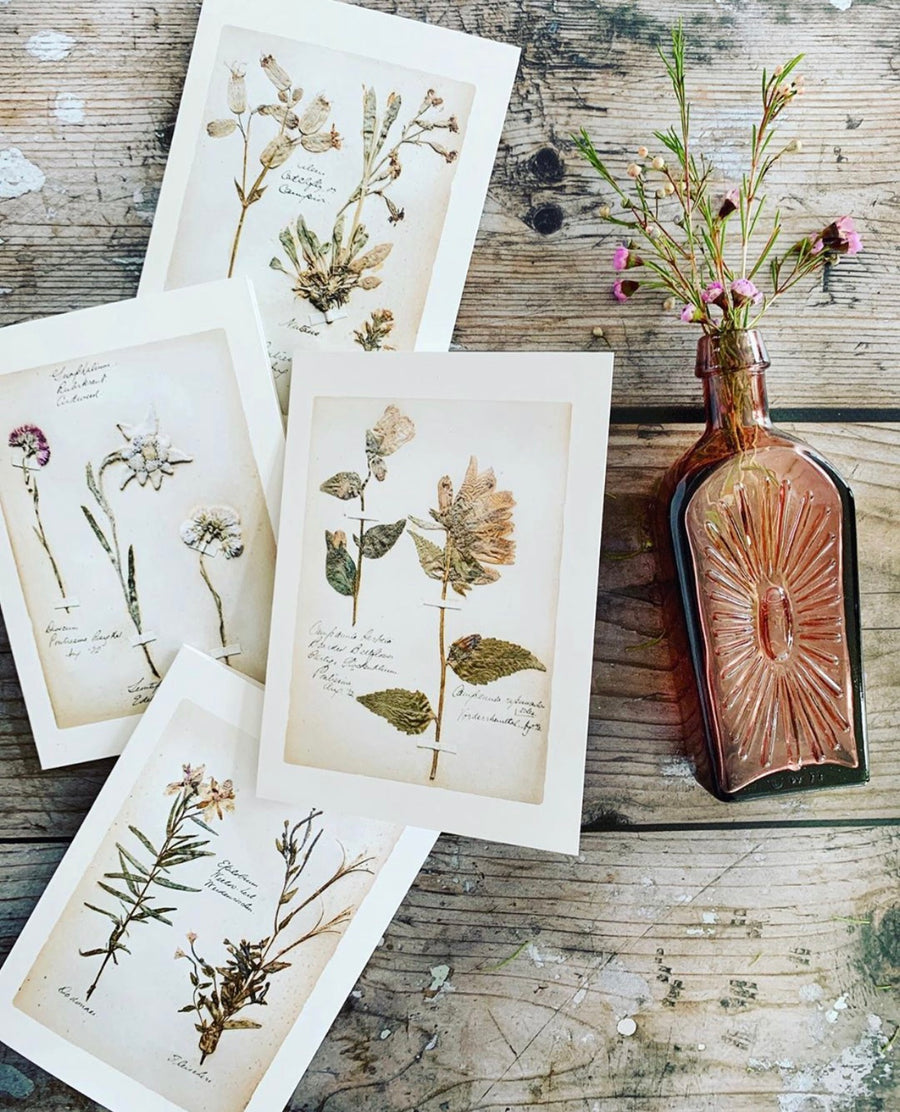 Swiss Herbarium Notecards