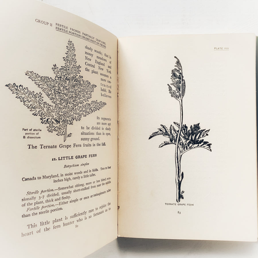 1929 - How To Know The Ferns